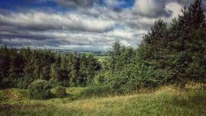 lesley-woodland-websize